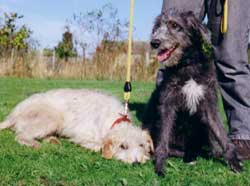 Photo for Brian and his friend Mylo are both bedlington/whippets