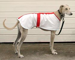 Photo for Lovely Lily showing off her new coat,which also helps her from getting sun stroke