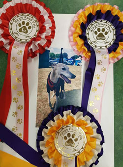 Photo for Well done to Merlin for winning three rosettes at the fun dog show.