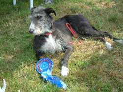 Photo for Millie with her 2nd place rosette that she won at  the Galloway Game Fair