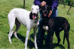 Photo for Kissie and Oliver, both greyhounds