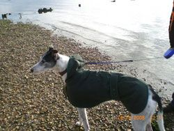 Photo for Shady enjoys a walk on the beach.