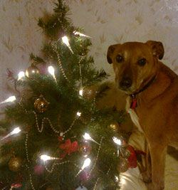 Photo for Teddy loves the Christmas tree.
